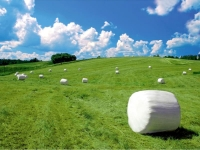 Пленка сельскохозяйственная, сетка сеновязальная, шпагат сеновязальный и иная сельхозпродукция от лучших производителей Европы