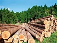 Лесоматериалы без сучка и задоринки