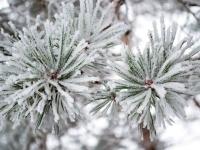 Погрузитесь в тепло и уют зимнего отдыха